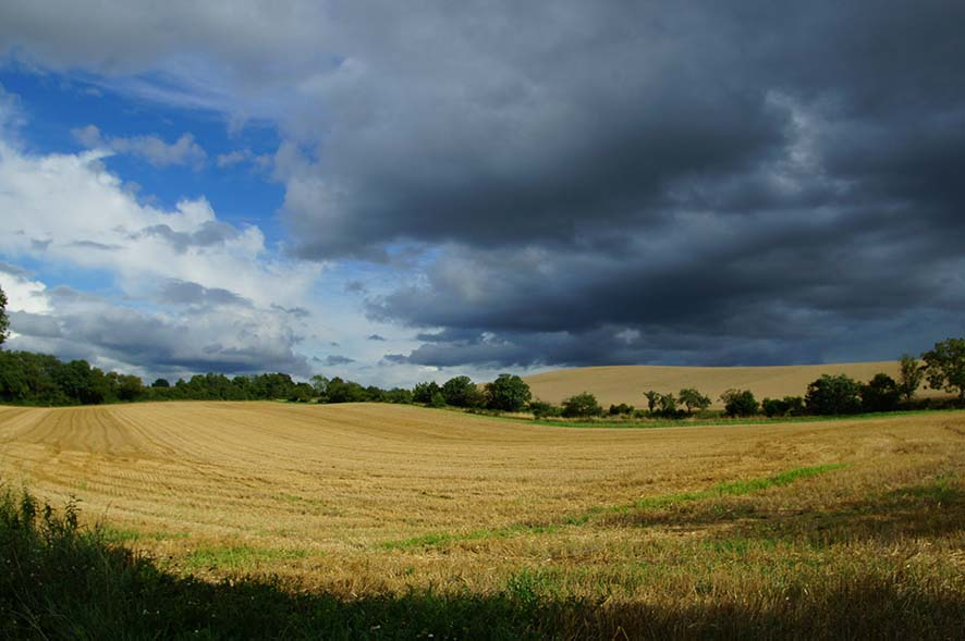 paysage, campagne, nature, ete
