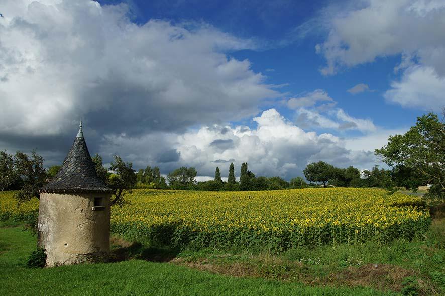 paysage, nature, campagne, champ de tournesols