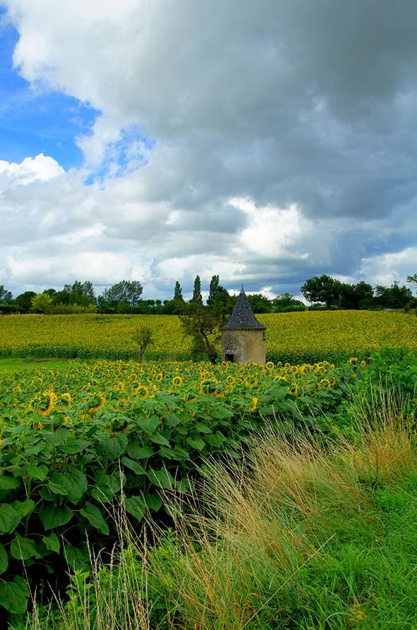 paysage, campagne, champ de tournesol, ciel, nuages, ete